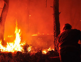 Mangal keyfi koca ormanı yok etti!