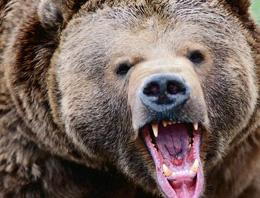 Erzurum'da yine ayı saldırdı