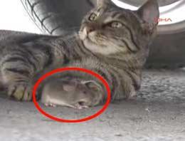 Bodrum'da kedinin fareyle ilginç oyunu