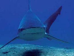 Bakanlık deniz canlılarını takipte!