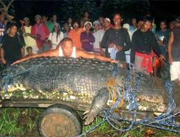 1 tonluk dev timsah öldü