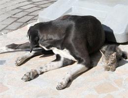Kedi ve köpekten insanlara ders!
