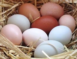 Yumurta fiyatları yatay seyrediyor