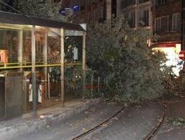 Tramvay yoluna ağaç devrildi!