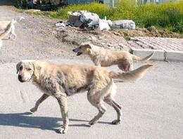 Sokak köpekleri bir kadını öldürdü