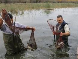 Söke'de 500 kilo yılan balığı dağıtıldı