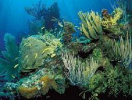 WWF: Deniz yaşamı 40 yılda yarı yarıya azaldı