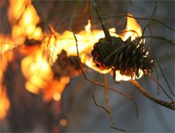 Kasıtlı orman yaktılar
