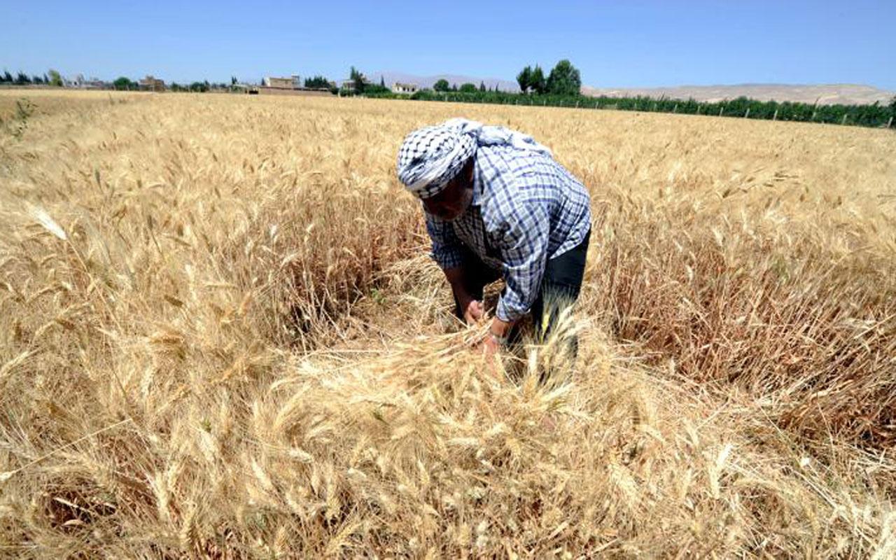 Çiftçilere 780 milyon TL hasar tazminatı! Bakan Pakdemirli duyurdu