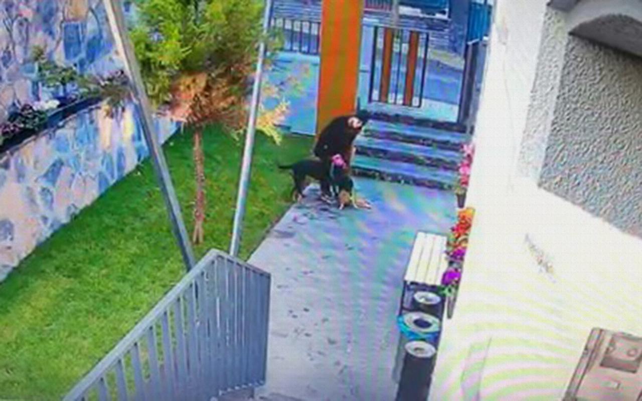 Vicdansız kadın köpeğini kediyi parçalarken izledi!