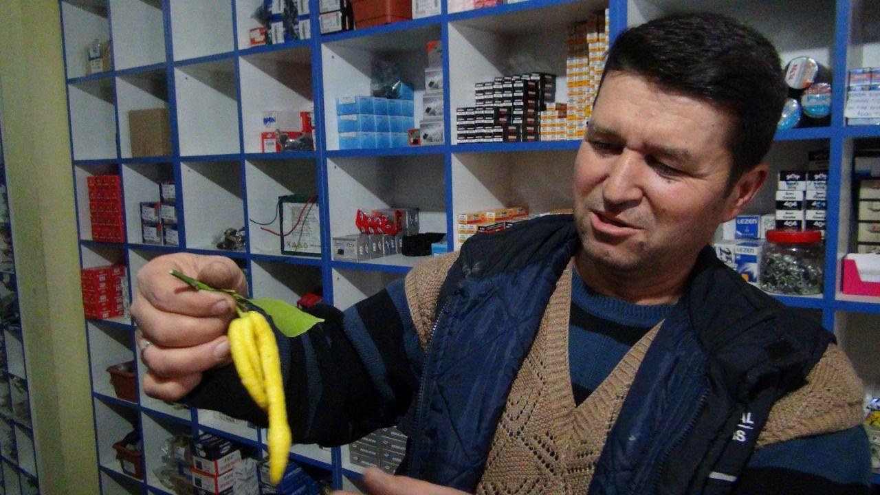 Mersin'de çiftçiyi şok eden görüntü 'biberli limon'
