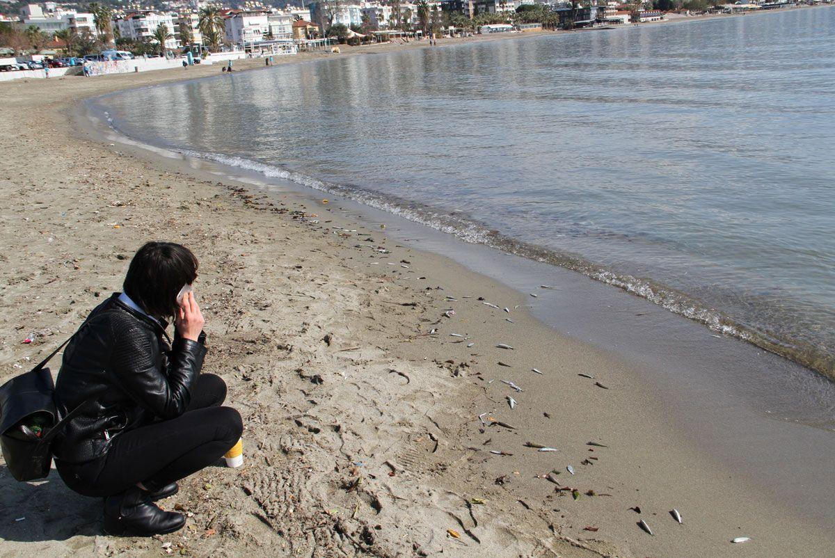 Alanyalılar diken üstünde! On binlercesi birden sahile vurdu - Sayfa 4