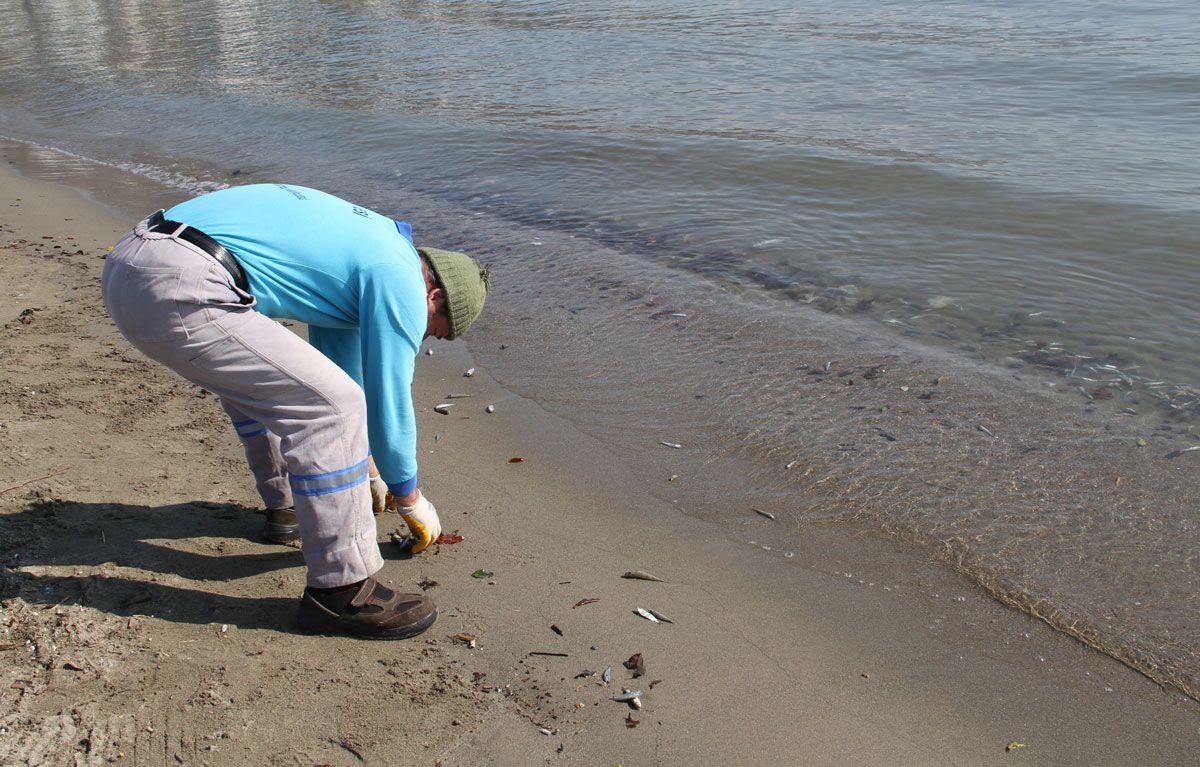 Alanyalılar diken üstünde! On binlercesi birden sahile vurdu - Sayfa 6