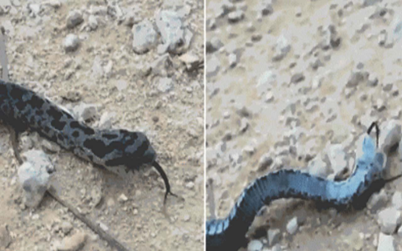 Ölü numarası yapan yılan