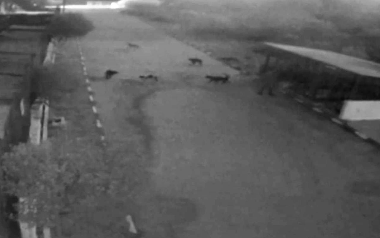 Alkollü kadın Muğla'da barınağı basıp tüm köpekleri serbest bıraktı