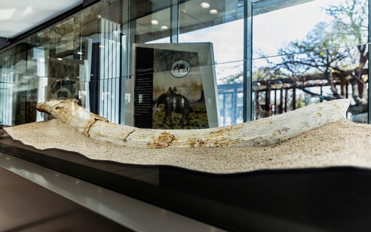 Kayseri'de bulunan 7,5 milyon yıllık fosiller sergide ziyarete açıldı