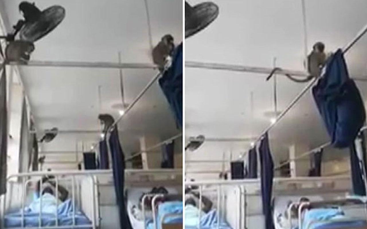 Hastanede akıl almaz olay! Maymunlar bastı