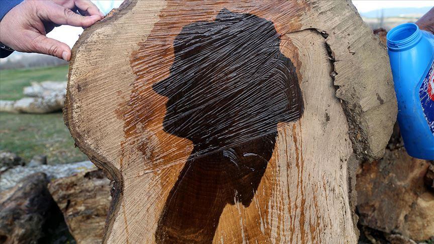 Kastamonu'da ilginç olay! Ağacın gövdesinden kadın silüeti çıktı