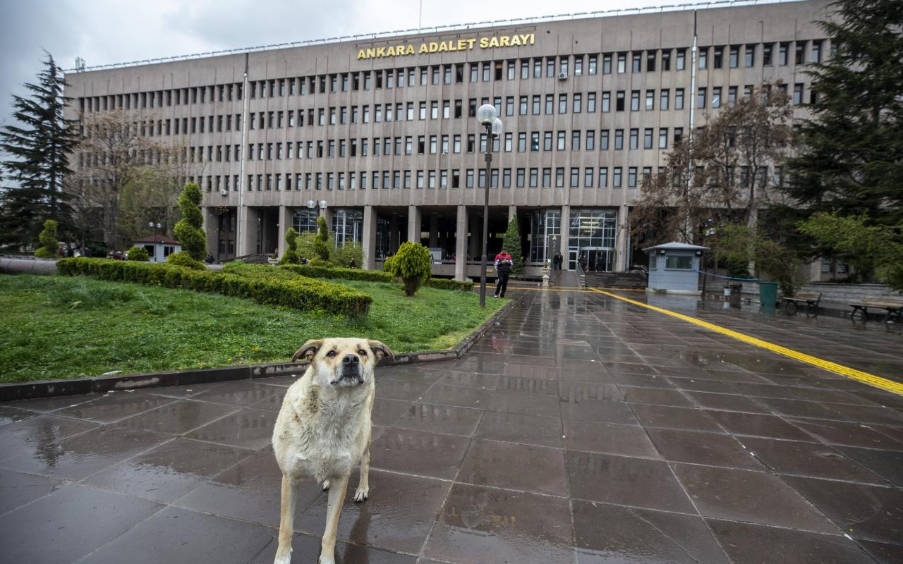 Ankara'da köpekleri zehirleyen 3 kişi için şaşırtan karar