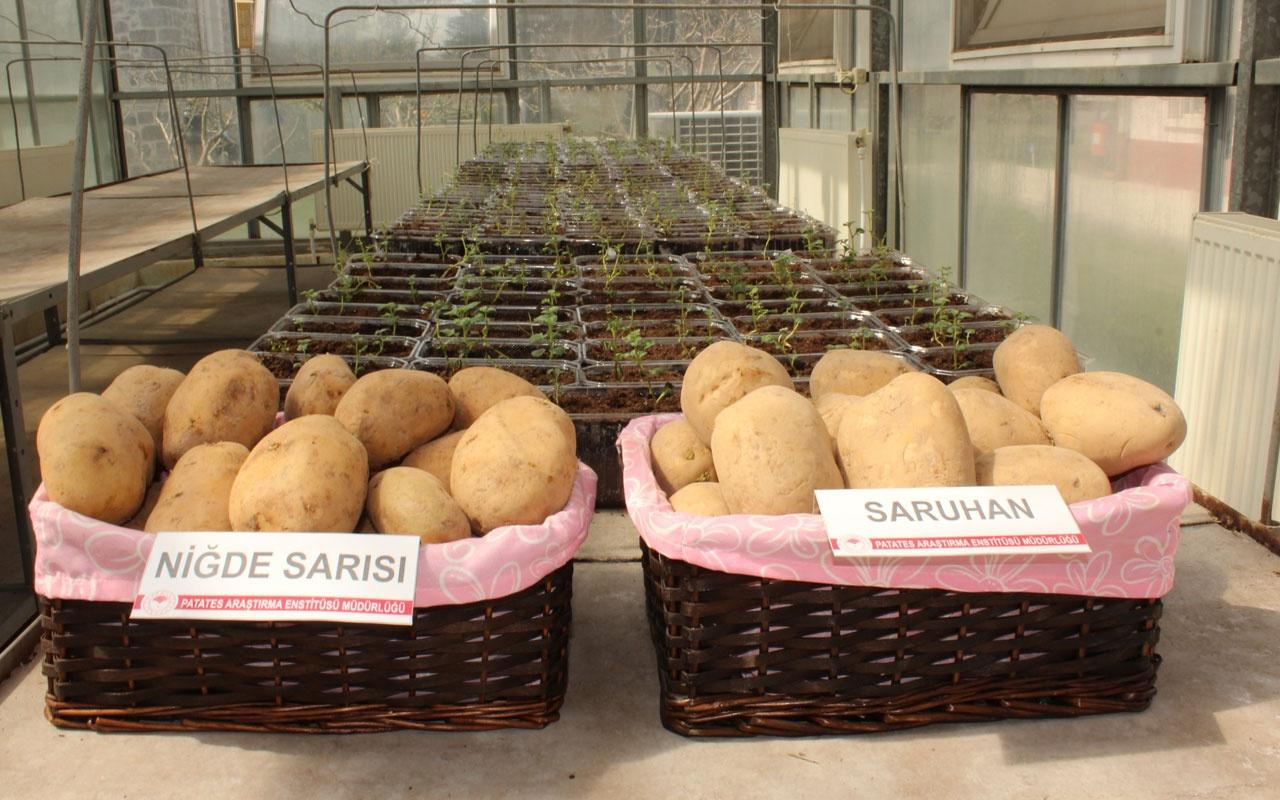 Niğde'de 2 milli patates çeşidine daha tescil