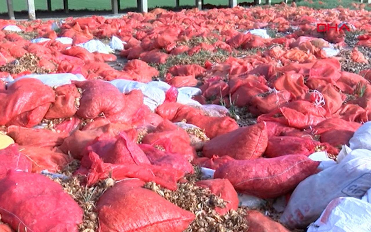 Ankara Polatlı'da tonlarca çürümüş soğan atıldı