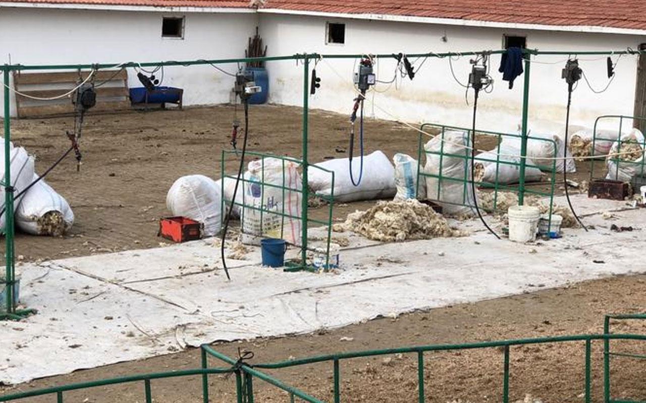 Tekirdağ'da çiftlikte can pazarı yaşandı