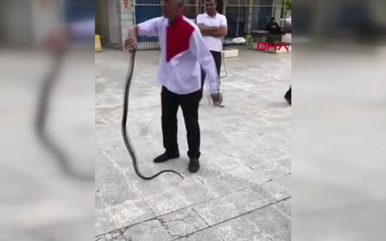 Adana'da kendini yılana ısırtan adam baygınlık geçirdi