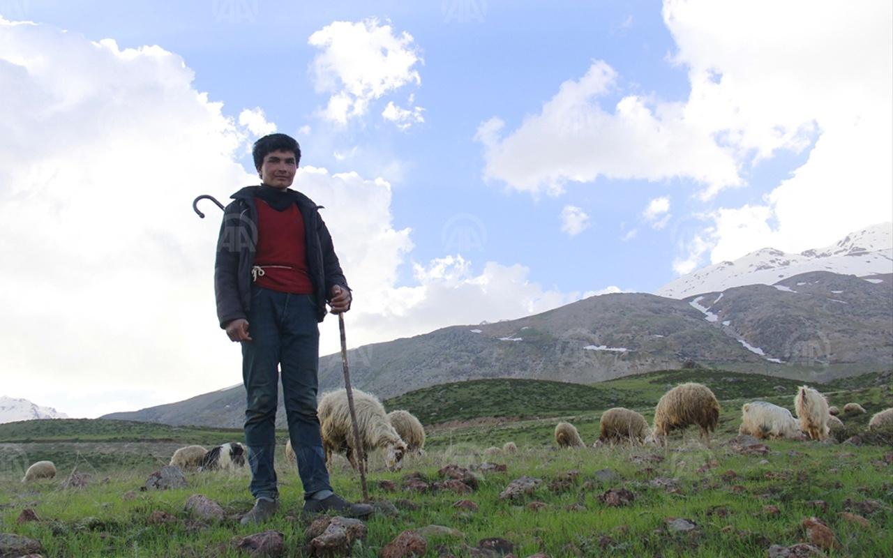 Çobanların ilkbahardaki zorlu mesaisi