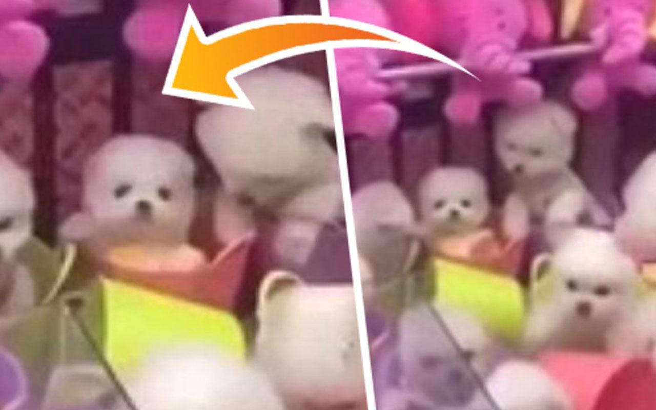 Sosyal medya yıkıldı! Makinede oyuncak yerine canlı köpek kullanıyorlar