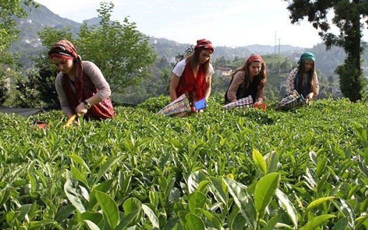 Cumhurbaşkanı Erdoğan yaş çay alım fiyatını açıkladı
