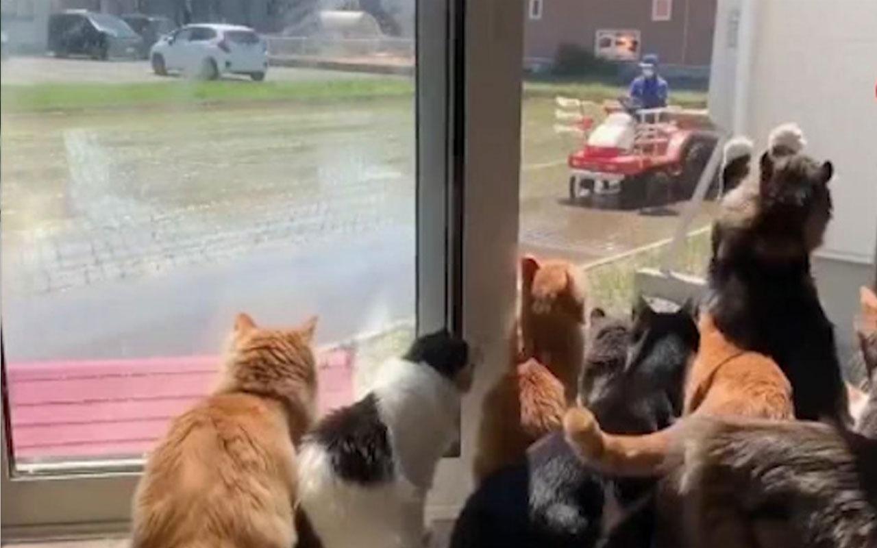 Kediler çiftçiyi dakikalarca pür dikkat izledi