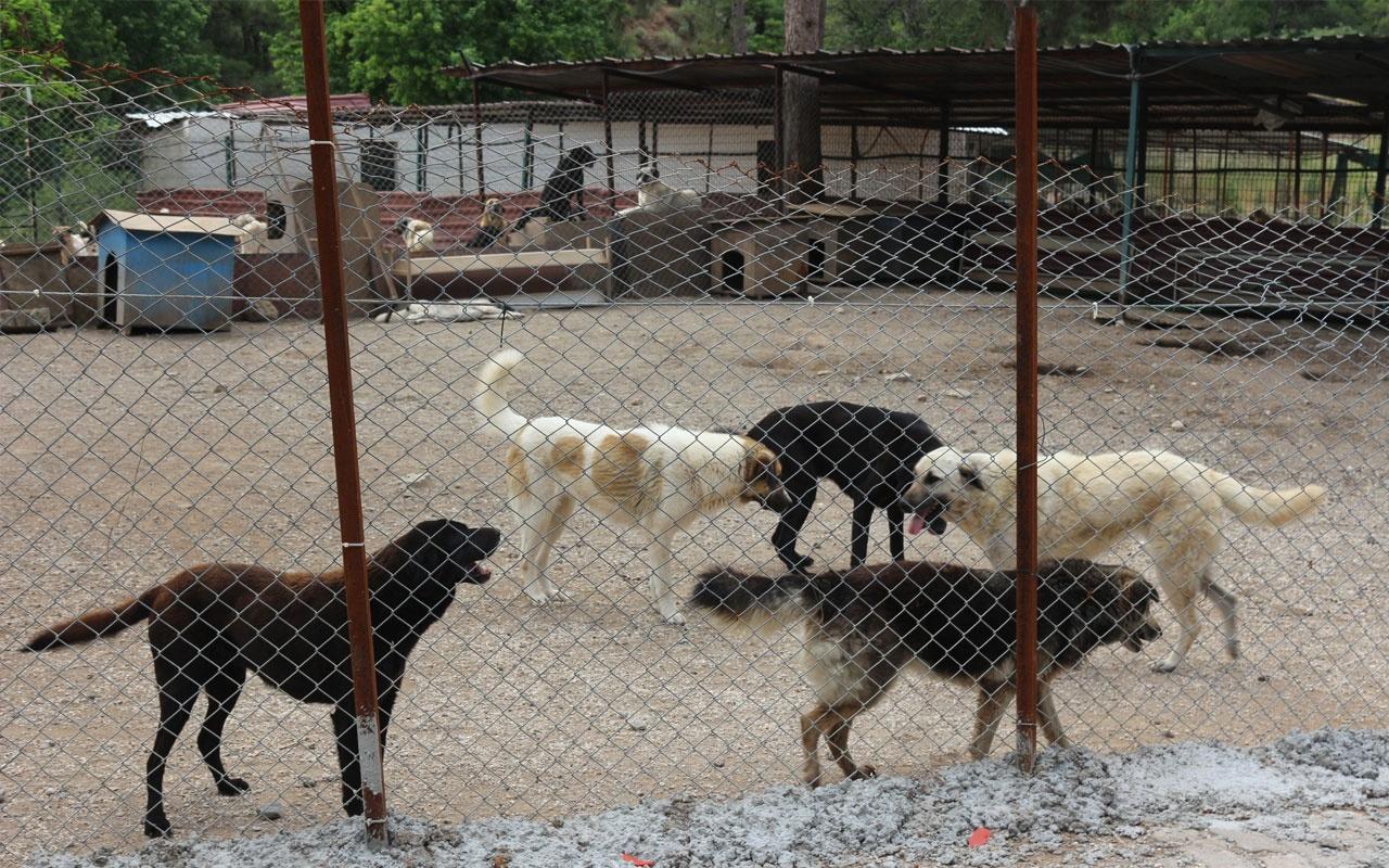 Hayvanseverler Pitbull'un yasaklı ırktan çıkarılmasını istiyor