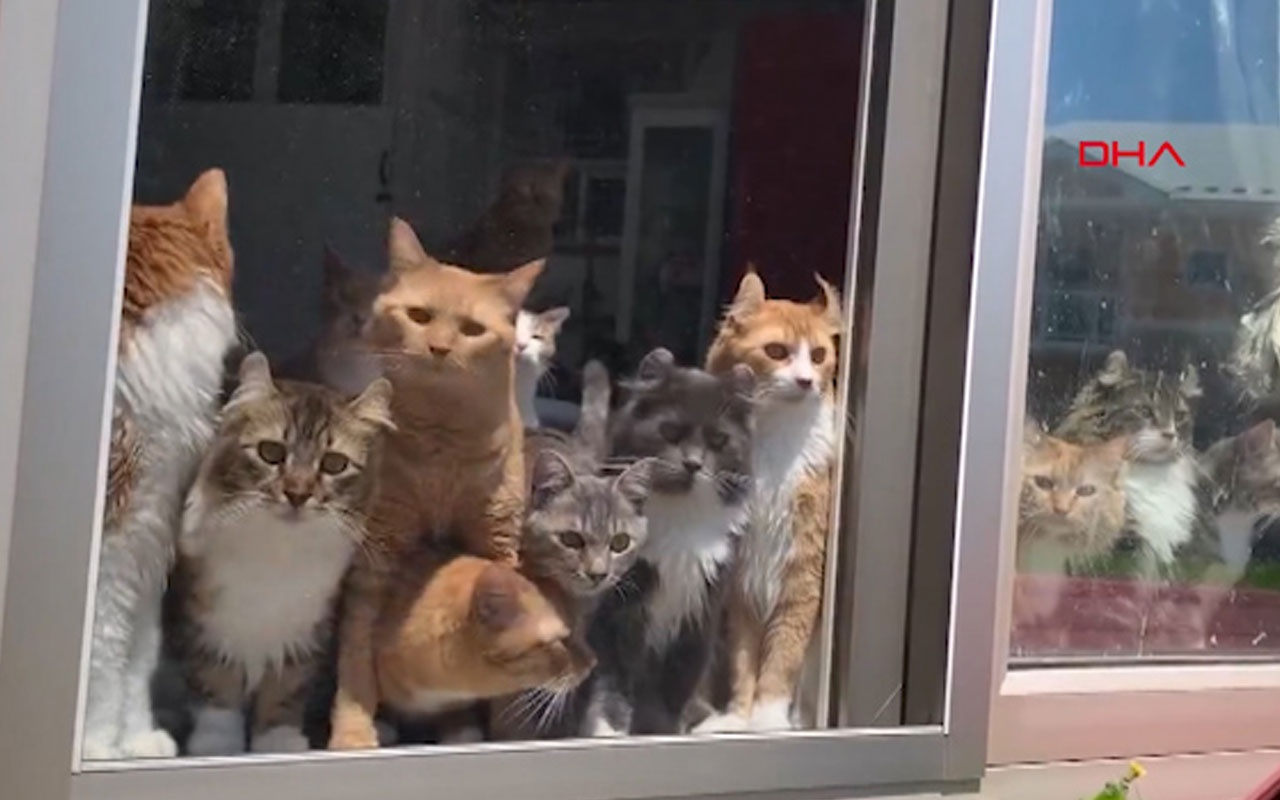 Kedilerin çiftçi merakı kamerada