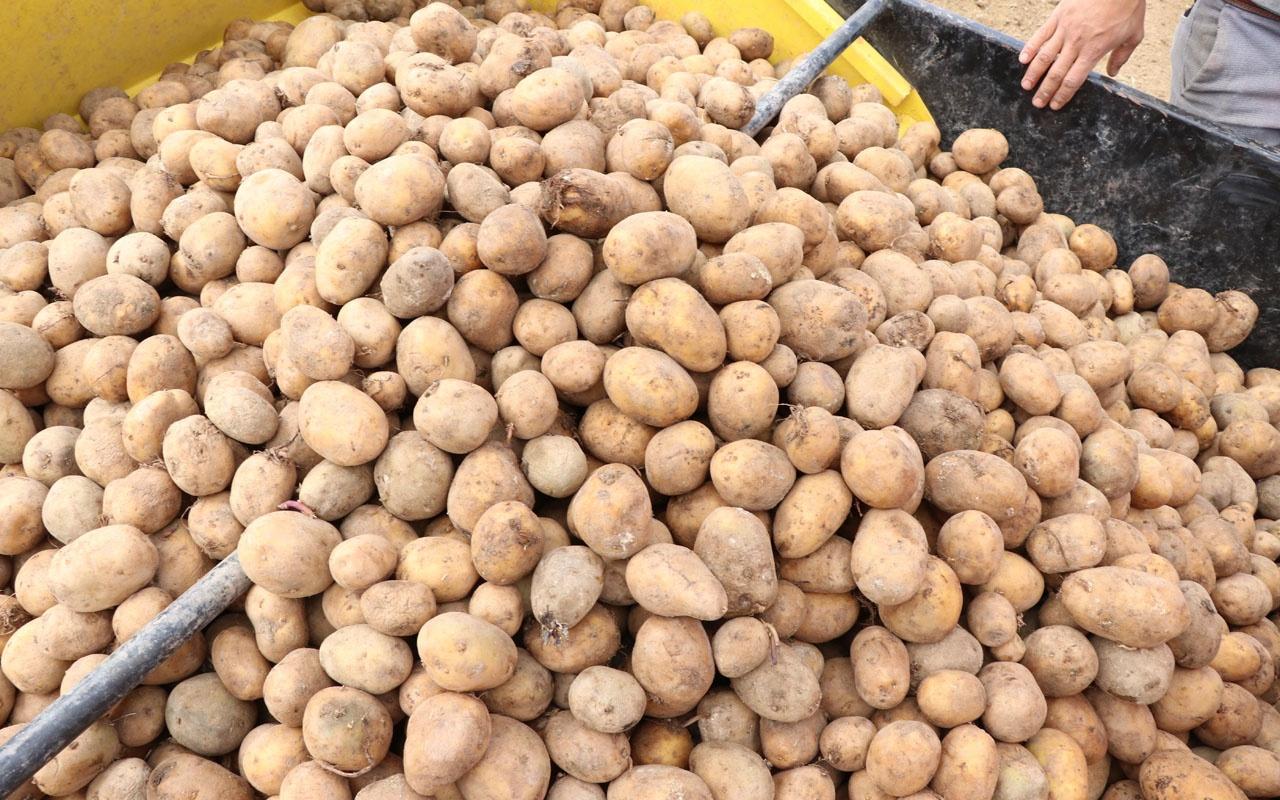 Patates tarım alanaları genişliyor