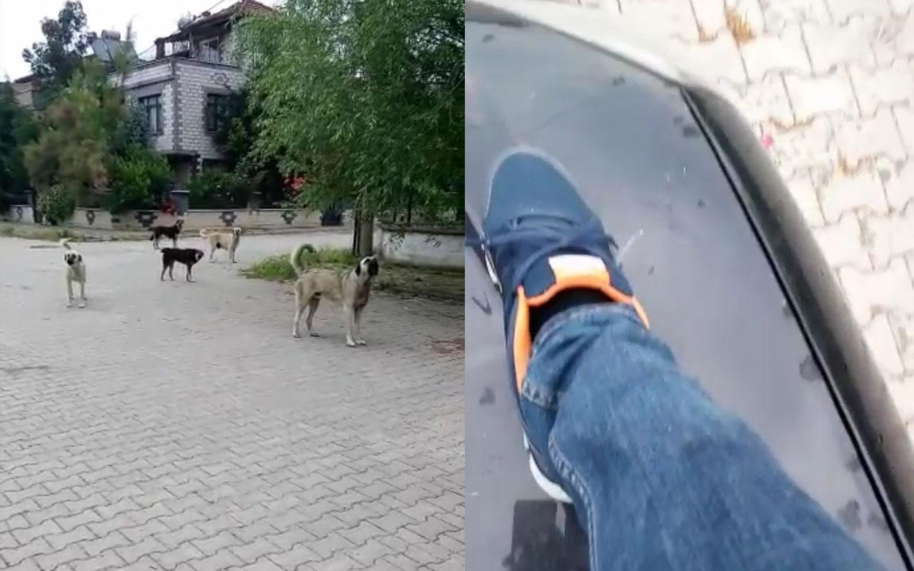 Köpekleri görüntülemek isterken saldırıya uğradı