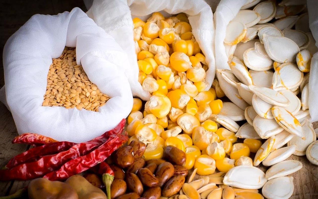 Atalık tohum ürünleri çok yakında marketlerde
