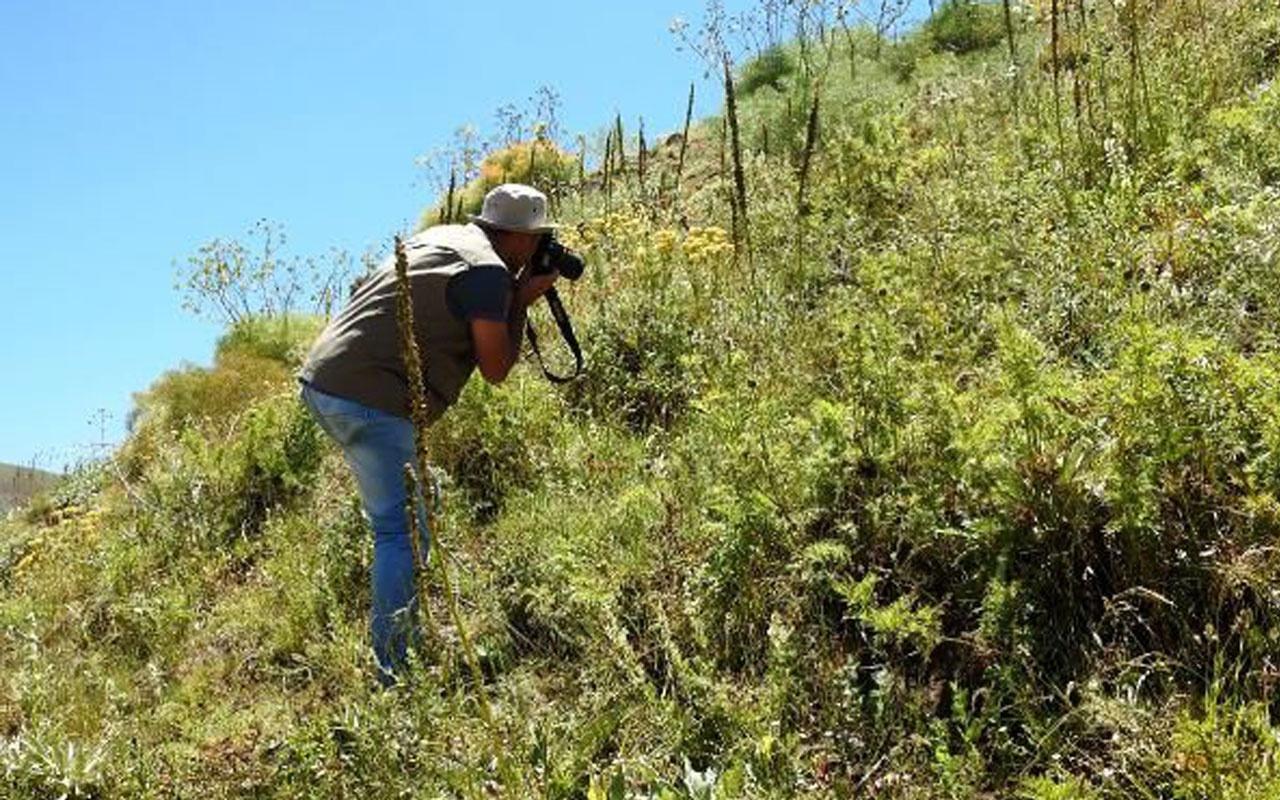 Giresun'da sıradışı endemik bitti! 150 yıl sonra ortaya çıkan kan damlası