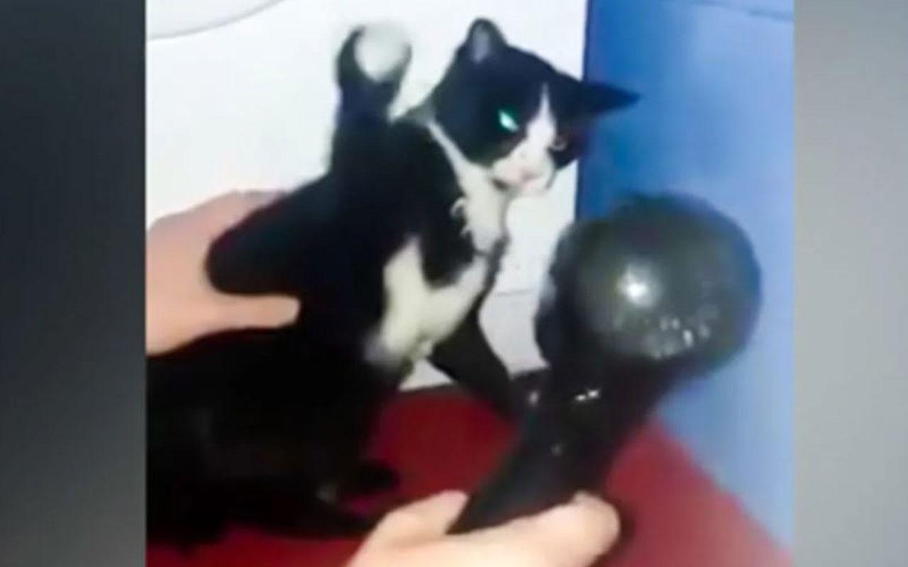 Kediyi kurutmak hiç kolay olmadı!