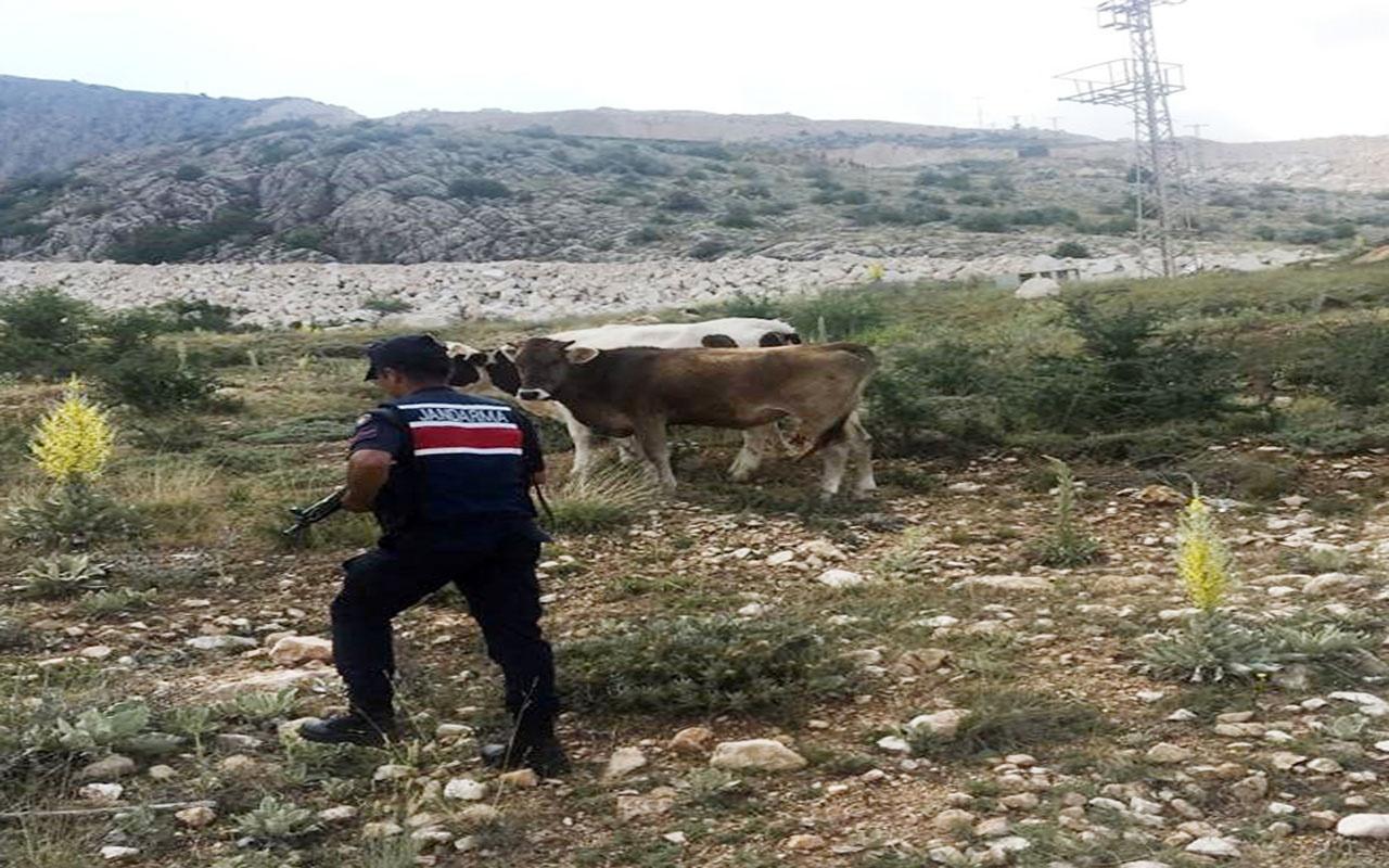 Burdur'da kaybolan 4 inek drone yardımıyla bulundu