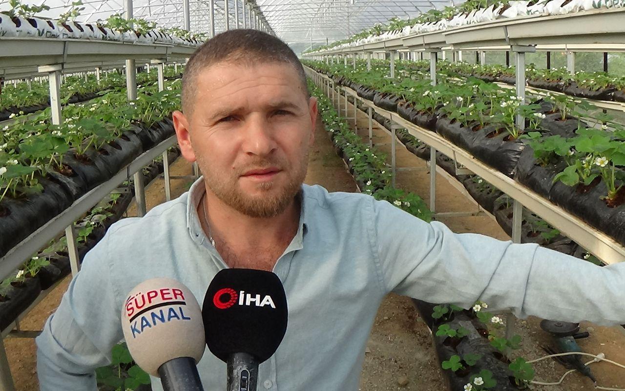 Bursa'da çilekleri bilgisayarlı sistemle yetiştiriyor