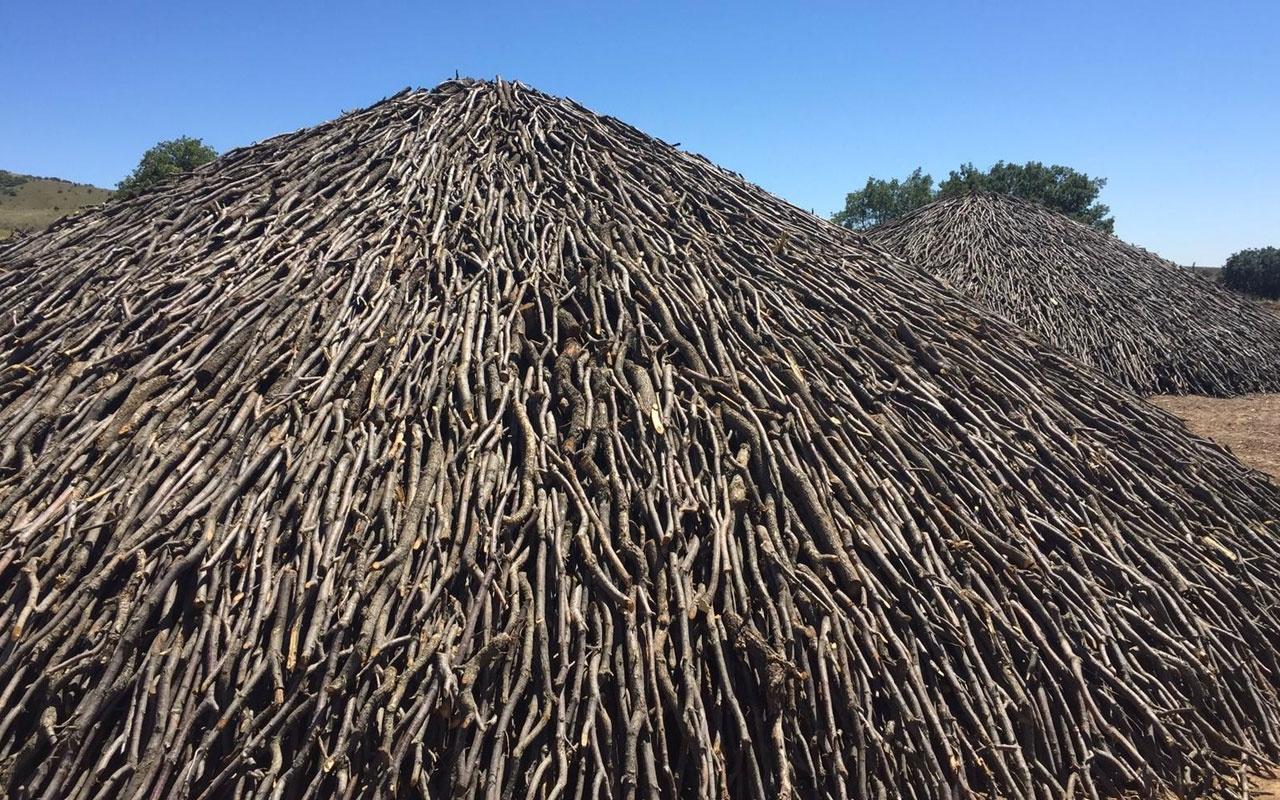 Yozgat'ta üretiliyor! 150 ton meşe ağacından 30-40 ton elde ediliyor