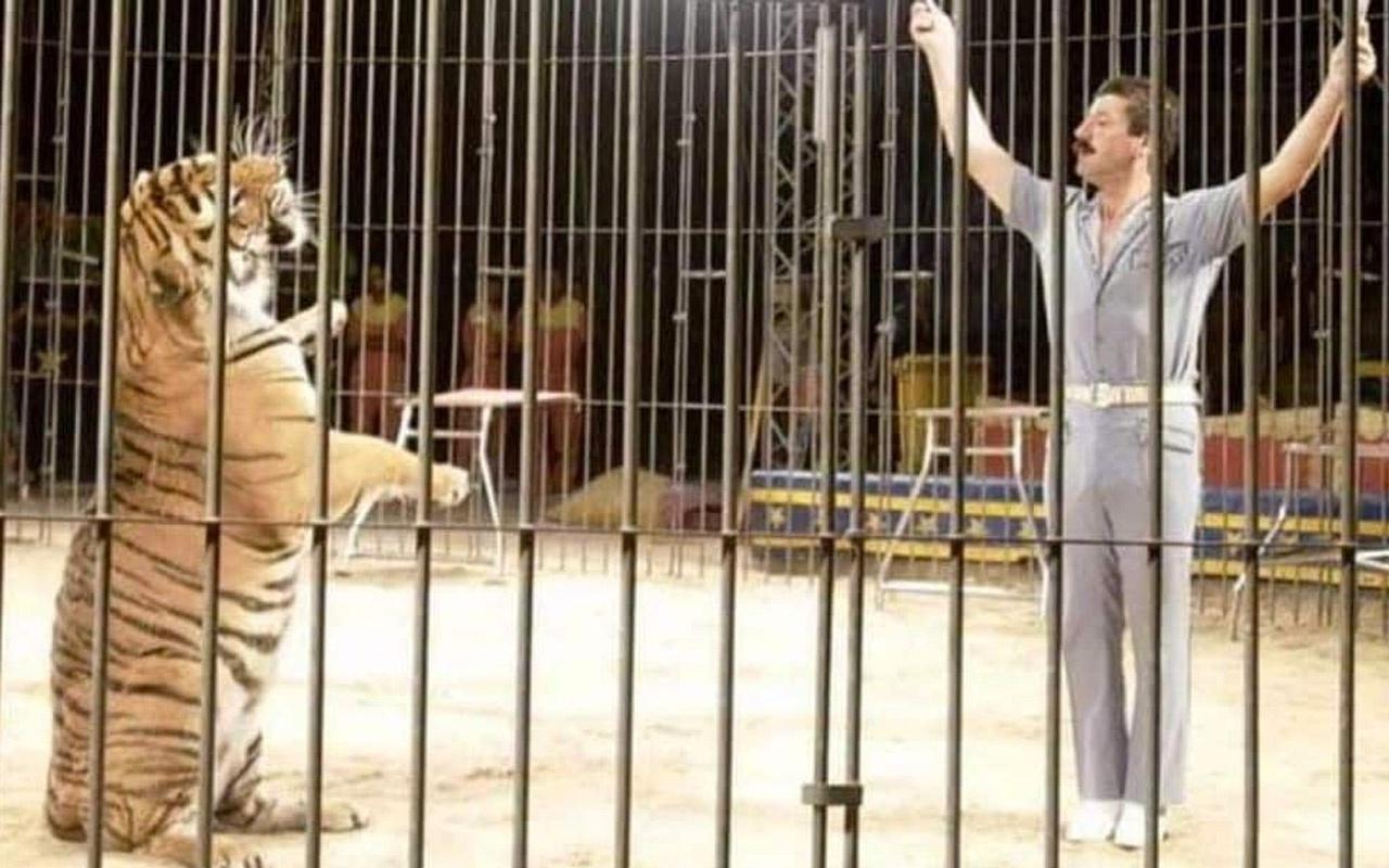 Sirkteki kaplanlar terbiyecilerini öldürdü