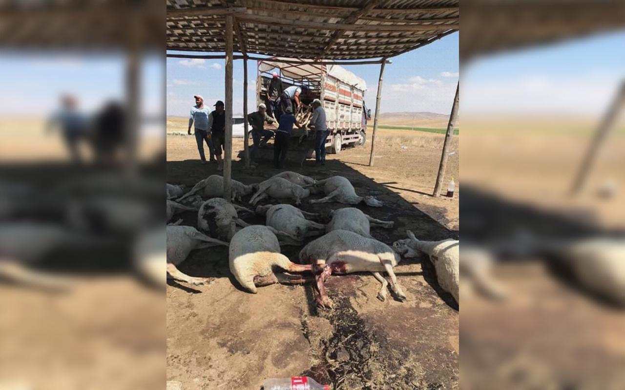 Ankara Polatlı'daki hayvan ölümlerinin nedeni belli oldu