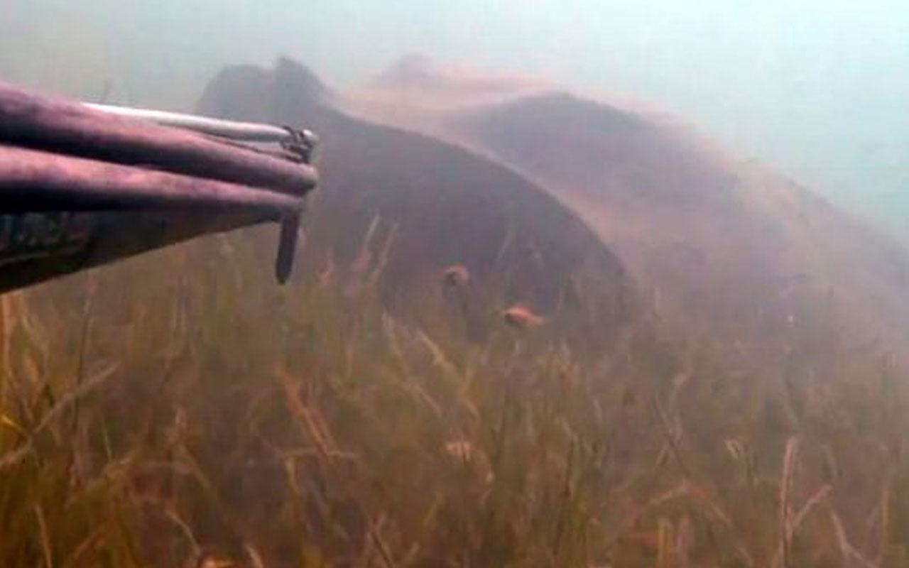 Rekortmen dalgıç Çanakkale'de 3 metre boyundaki zehirli vatozla burun buruna geldi