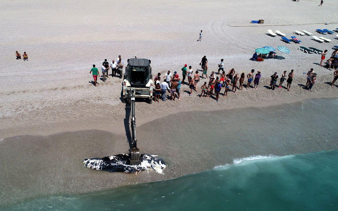 Ölüdeniz'de üç metre uzunluğundaki balina karaya vurdu! Gören telefona sarıldı - Sayfa 3