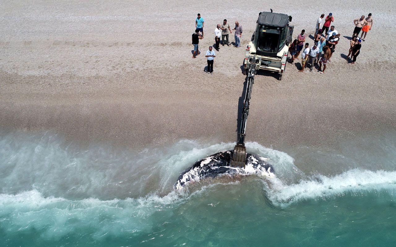 Ölüdeniz'de üç metre uzunluğundaki balina karaya vurdu! Gören telefona sarıldı - Sayfa 4