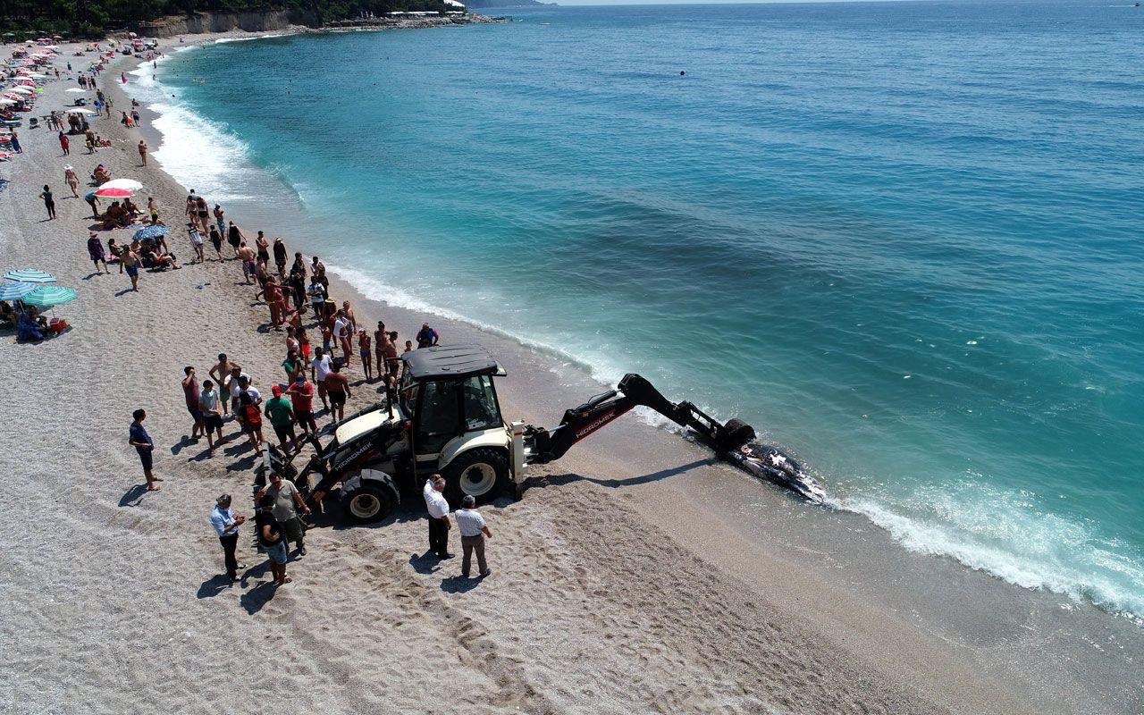 Ölüdeniz'de üç metre uzunluğundaki balina karaya vurdu! Gören telefona sarıldı - Sayfa 5