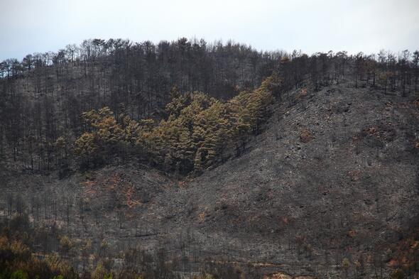 Muğla'nın Dalaman ilçesinde çıkan orman yangını söndürüldü - Sayfa 2