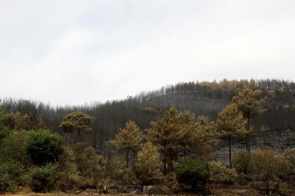 Muğla'nın Dalaman ilçesinde çıkan orman yangını söndürüldü - Sayfa 3