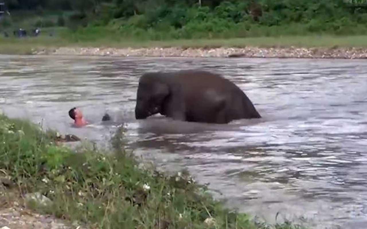 Fil boğulduğunu sandığı adamın yardımına koştu